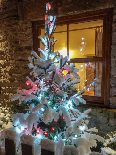 Cherry Tree at Christmas